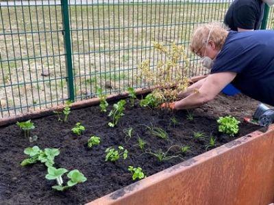 WG_Hochbeet_Bepflanzung2_bearbeitet